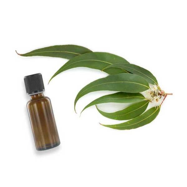 L'huile essentielle d'eucalyptus citronné contre les entorses