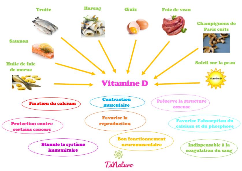 Les aliments riches en vitamine D