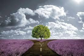 Comment j'envisage la naturopathie et mon rôle de naturopathe