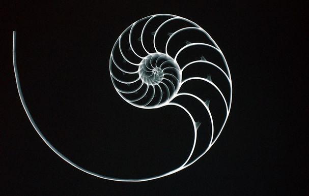nautilus-shell-1_edited.jpg