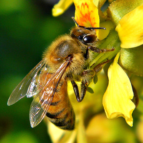 The buzzing bee!!! Why is it so important?