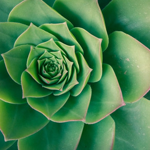 THE BEAUTY OF PLANTS AND THEIR INTERESTING FACTS?