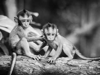 Talking About Monkeys