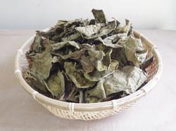 persimmon leaves tea
