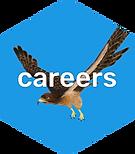 Krikey_Careers.png