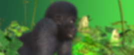 GorillaPosters_02.png