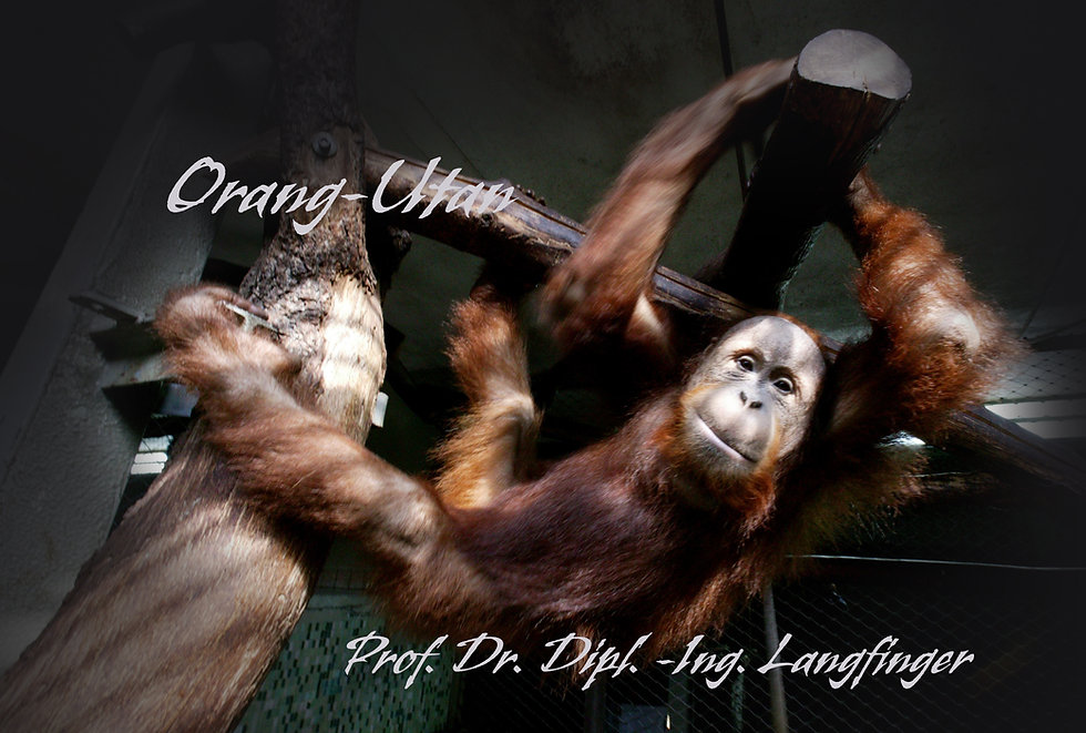 Frank Zauritz_Helge Timmerberg_Orang Utan_Titel 02 Kopie.jpg