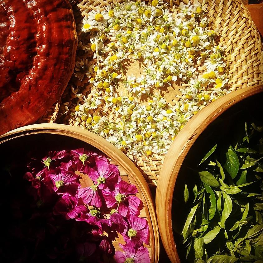 Intro à l'herboristerie 1 : la tisane, reconnaissancee et association de plantes
