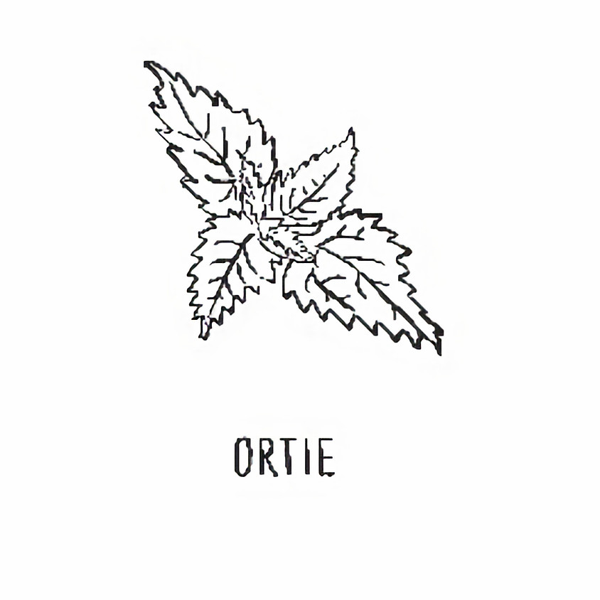 17 OCTOBRE // L'Ortie // Dorothée