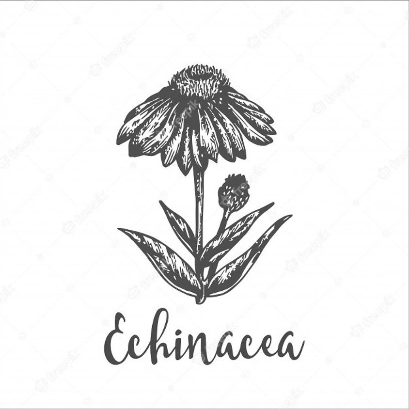 Soutenez votre Immunité avec l'echinacée : confection de votre teinture mère