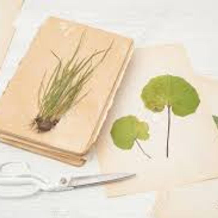 Commencez un cahier d'herboriste, herbier commenté