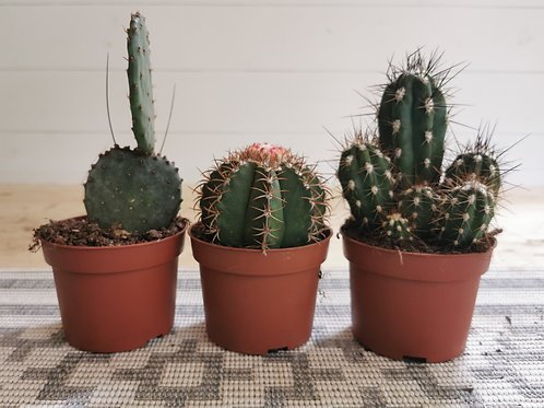 The Cactus Collection