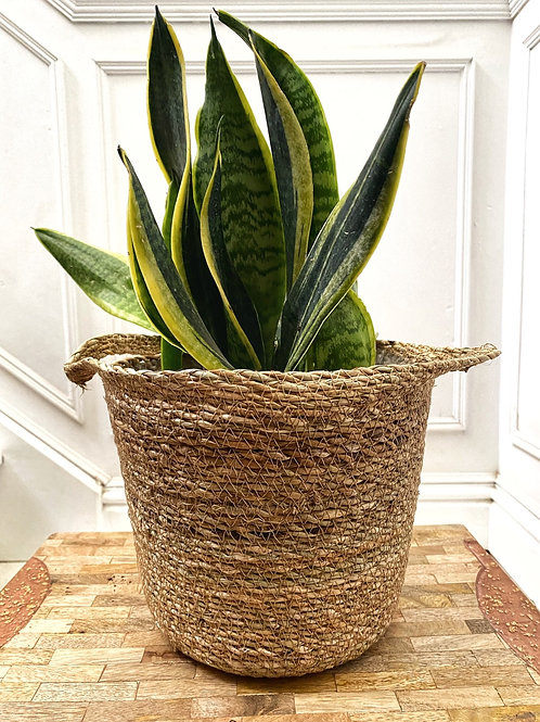 Otto Natural Woven Lined Basket