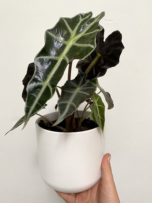 Lisbon White Planter