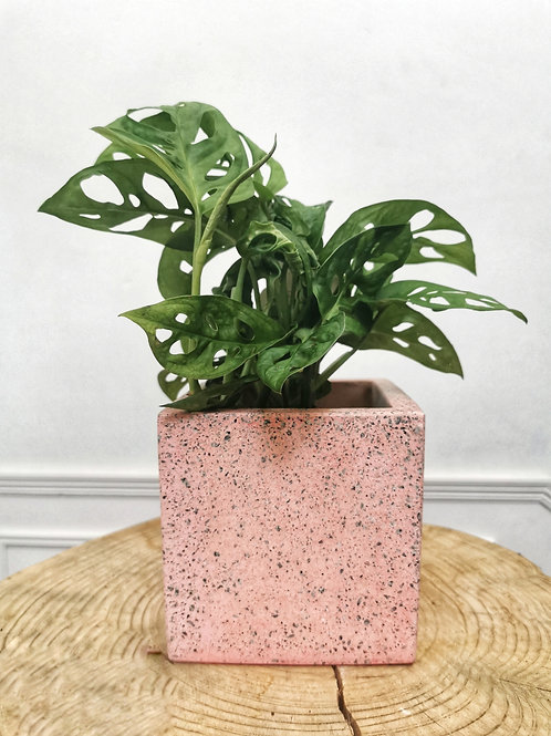 Pink Terrazzo Cube Planter