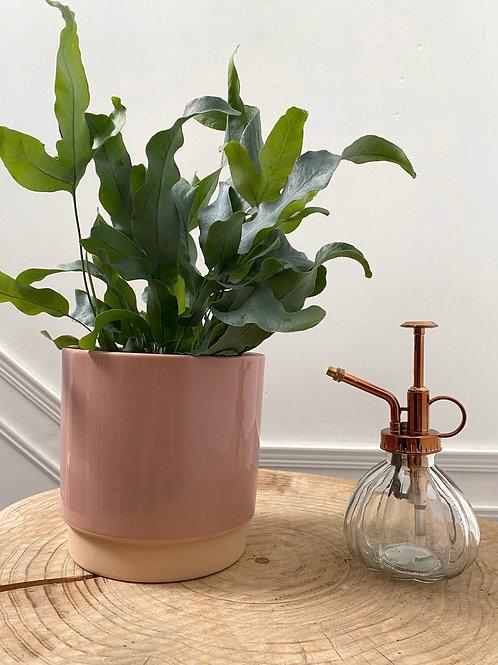 Botanical Plant Misters