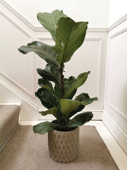 Large Diamond Cement Planter - Grey