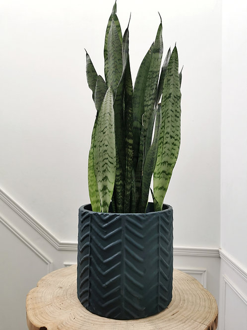 Large Wave Cement Planter - Teal
