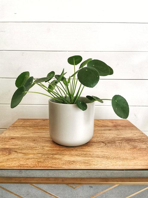 Lisbon Grey Planter