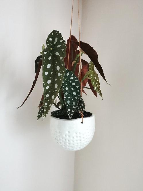 Small Dot Hanging Planter
