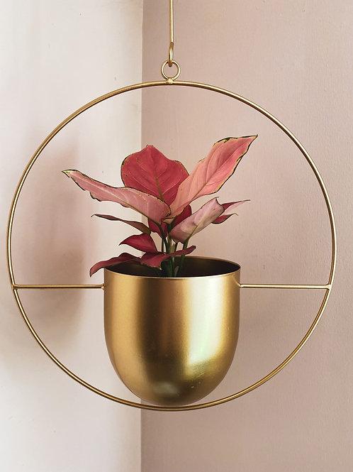 Gold hanging planter