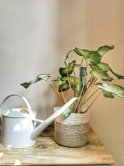 Large Indoor Watering Can -Buttermilk