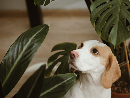 Pets and Plants - the perfect combo?