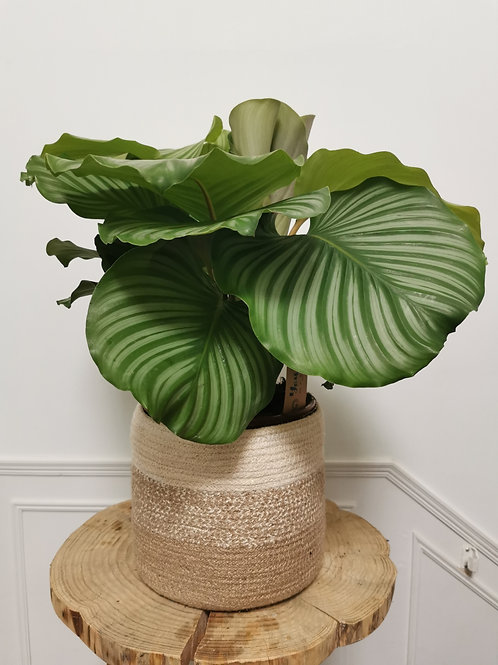 Large Seagrass Lined Planter
