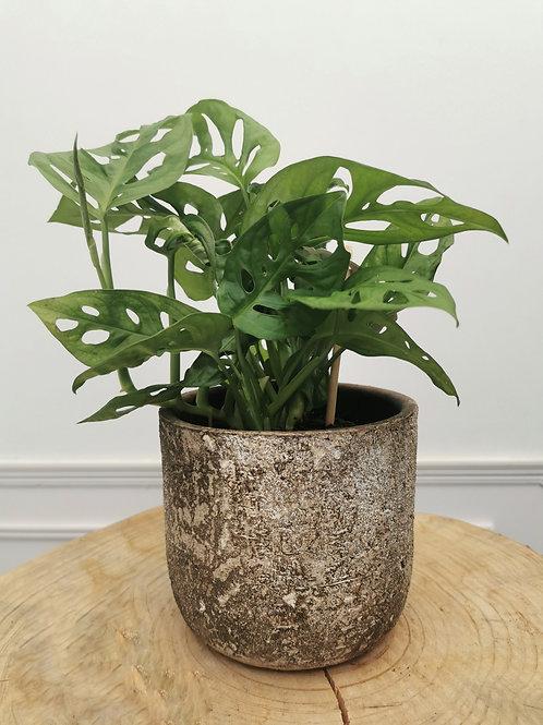 Albero Planter