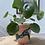 Thumbnail: Painted Pots by Grace Cooper