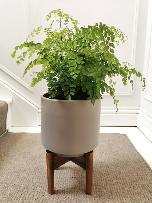 Vigo Concrete Planter with Stand