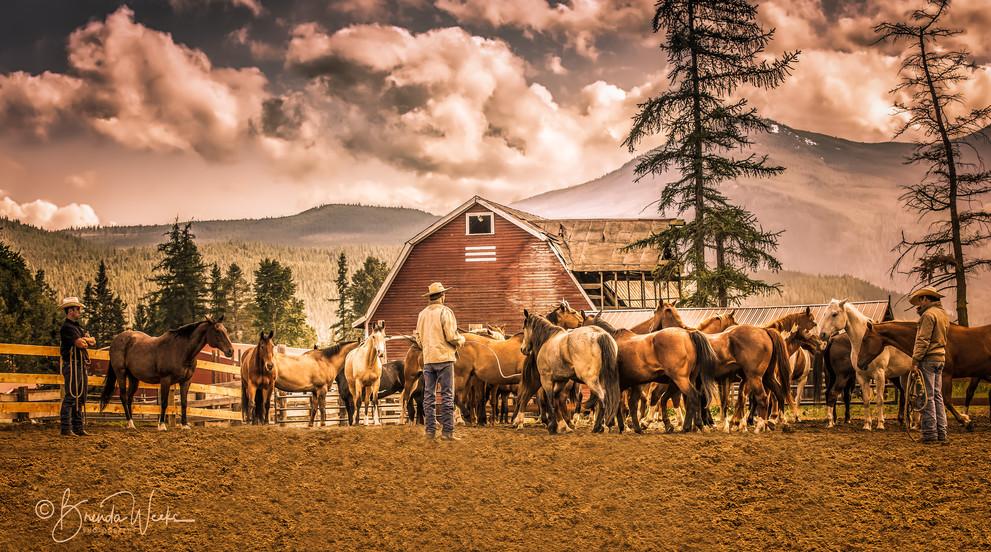 Holding Herd
