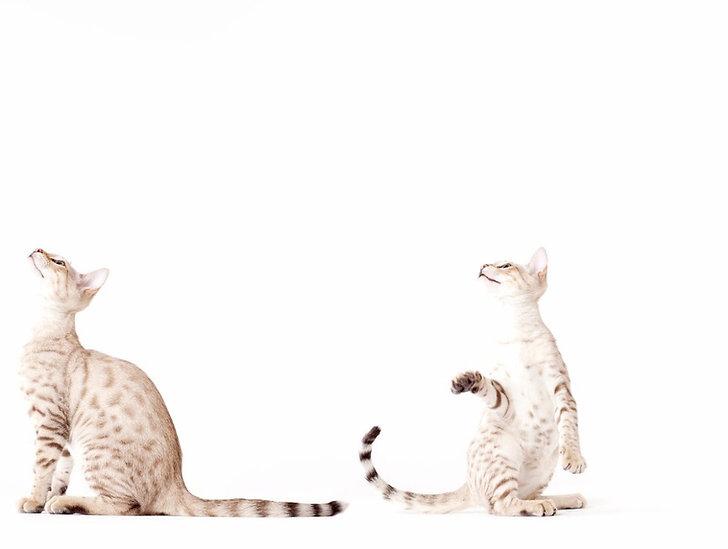 Erdbestattung Haustier