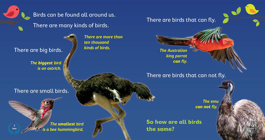 Birds2-3.jpg