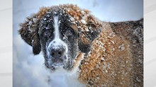 Way to keep pets safe in frigid temperatures