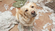 Common Dog Behavior Issues