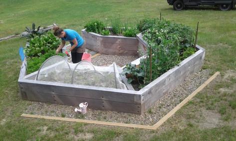veggie planting.jpg