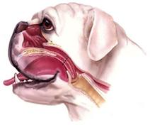 喉頭麻痺2.PNG