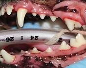 歯石4.PNG