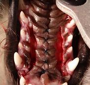 口蓋裂3.PNG