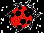 ladybug_edited_edited.png