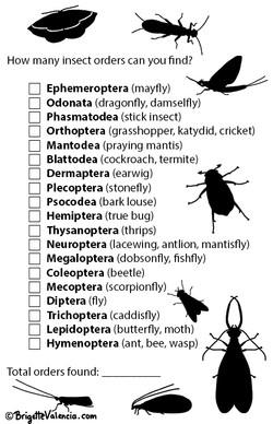 Insect biodiversity checklist
