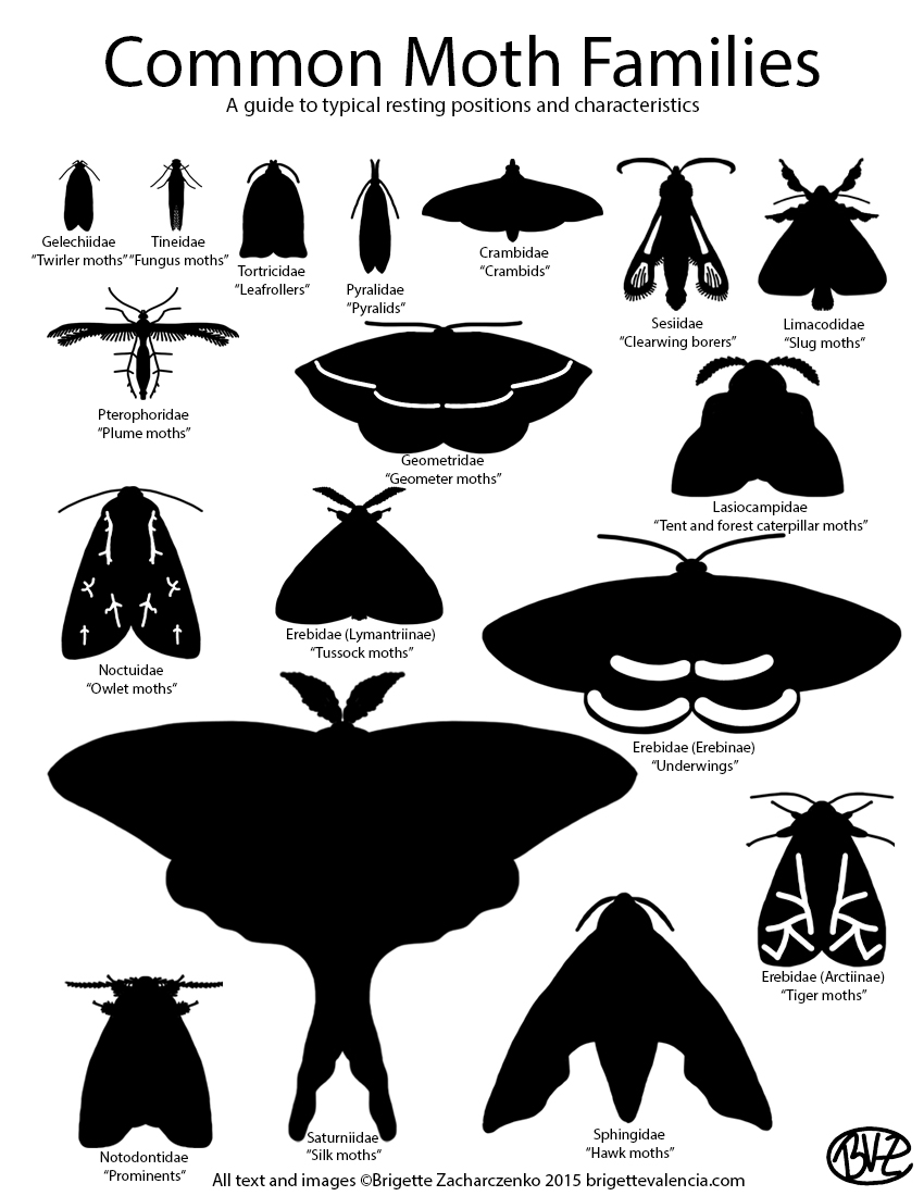 Moth guide
