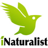 inaturalist_logo.png
