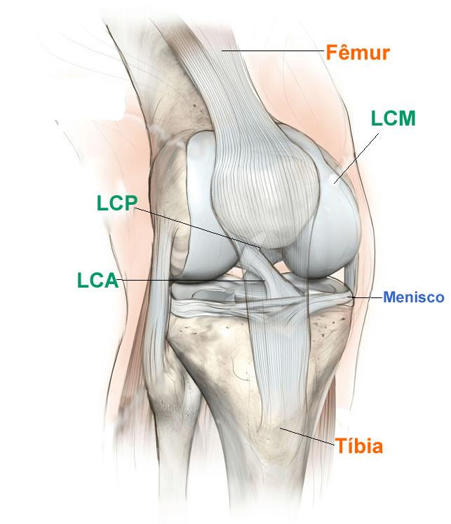 componentes do joelho