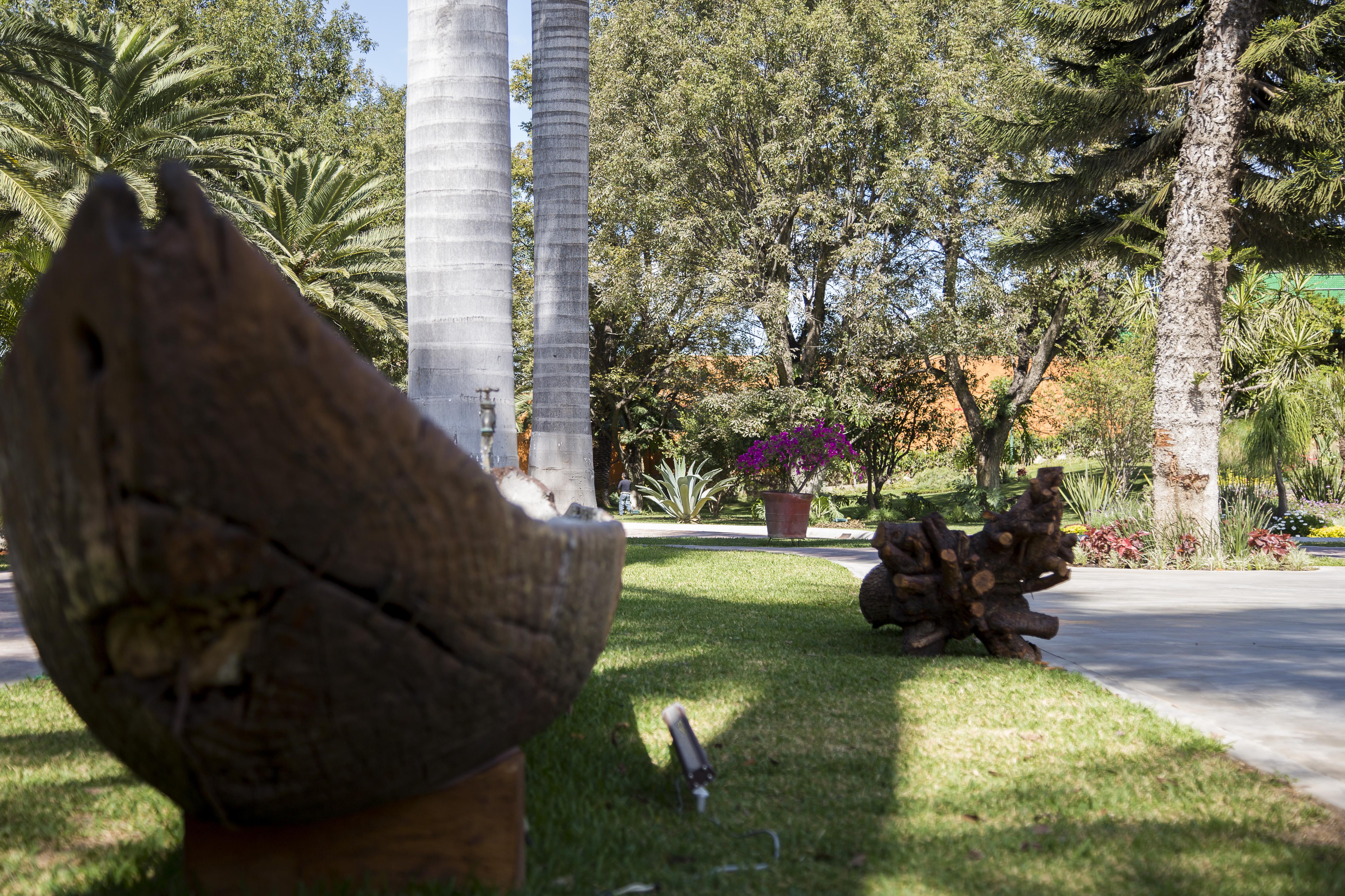 Avenida de palmeras