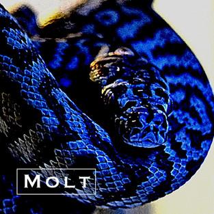【リリース情報】Morelia(Hiroaki kobayashi)が最新シングル『MOLT』を2.22にリリース