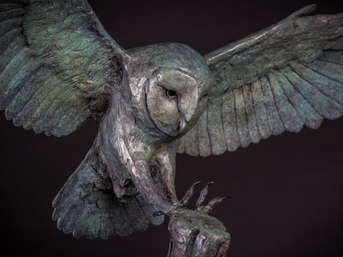 Landing Barn Owl