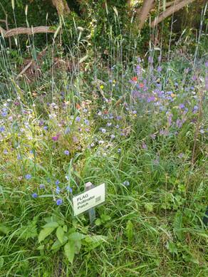 Pollinator Patch: July Blooming Peak