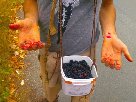 Blackberry Bounty - Pickin' Tips & Recipe